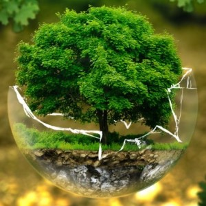 environmental-protection-326923 A