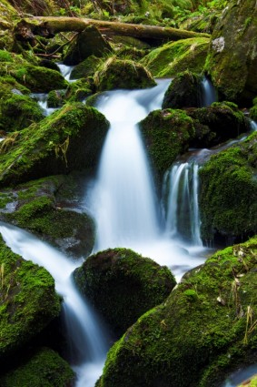 mountain_stream_and_moss_193711