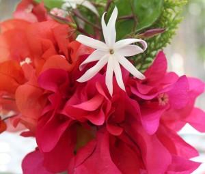 mex flower